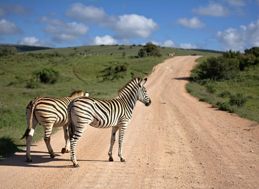 Safari Park South Africa Archives - My Life from a Bag
