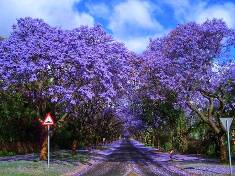 Pretoria: What to do if you only have one day