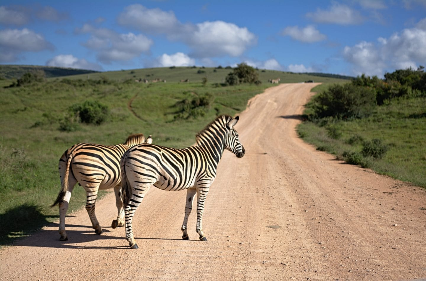 African Safari Experiences to add to your bucket list