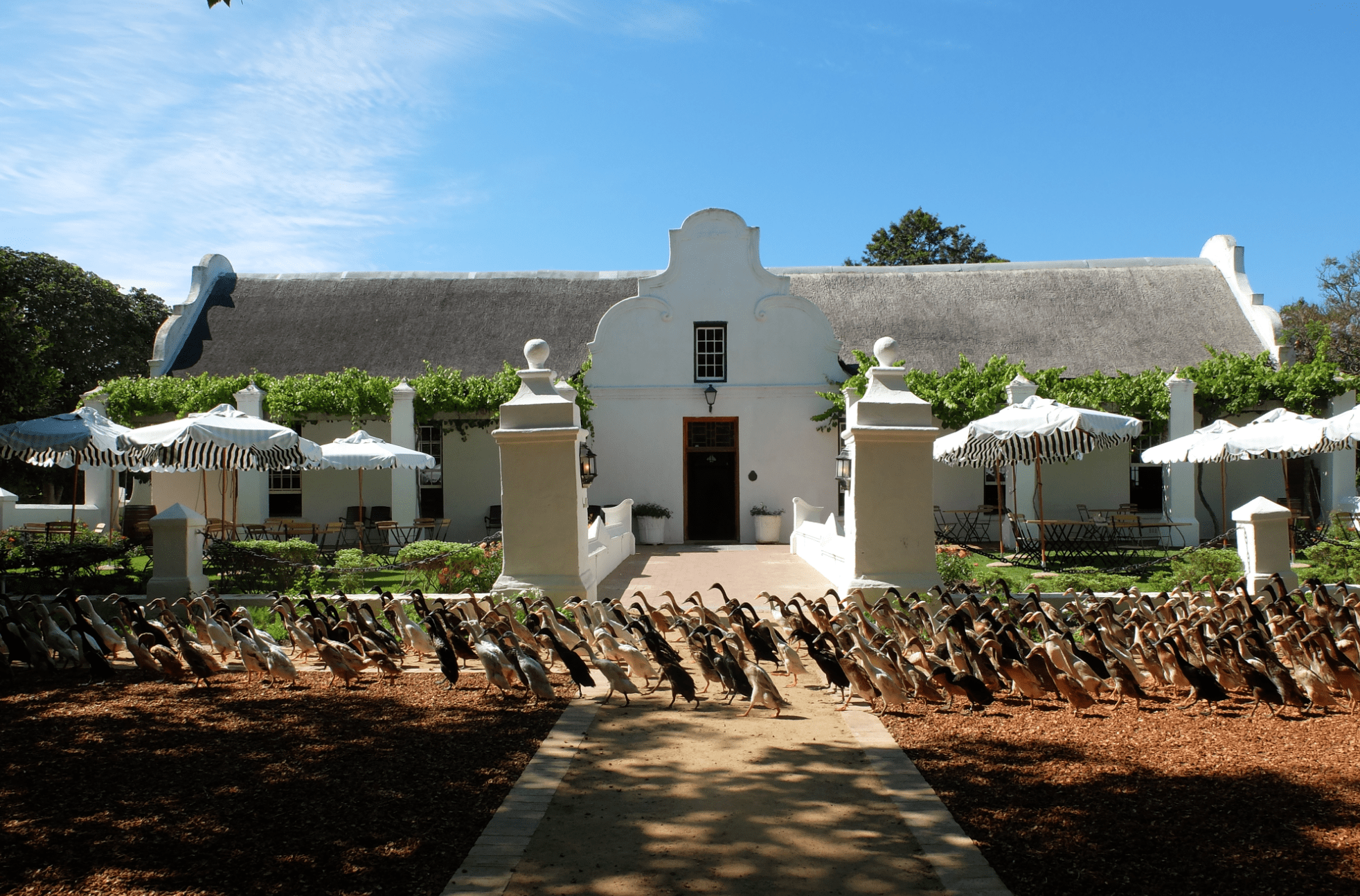 Things to do in Stellenbosch