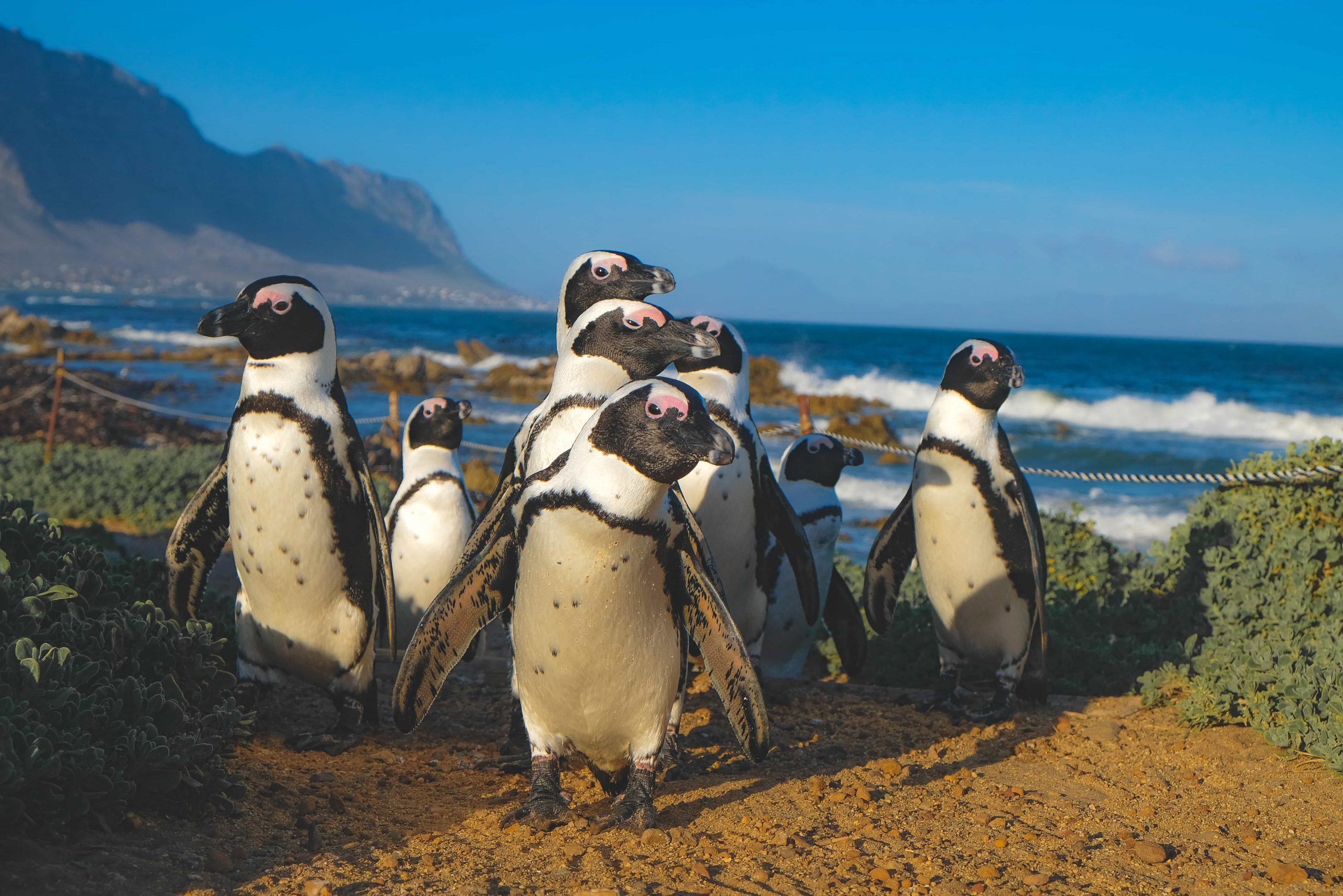 How to find the Penguin Beach in Cape Town