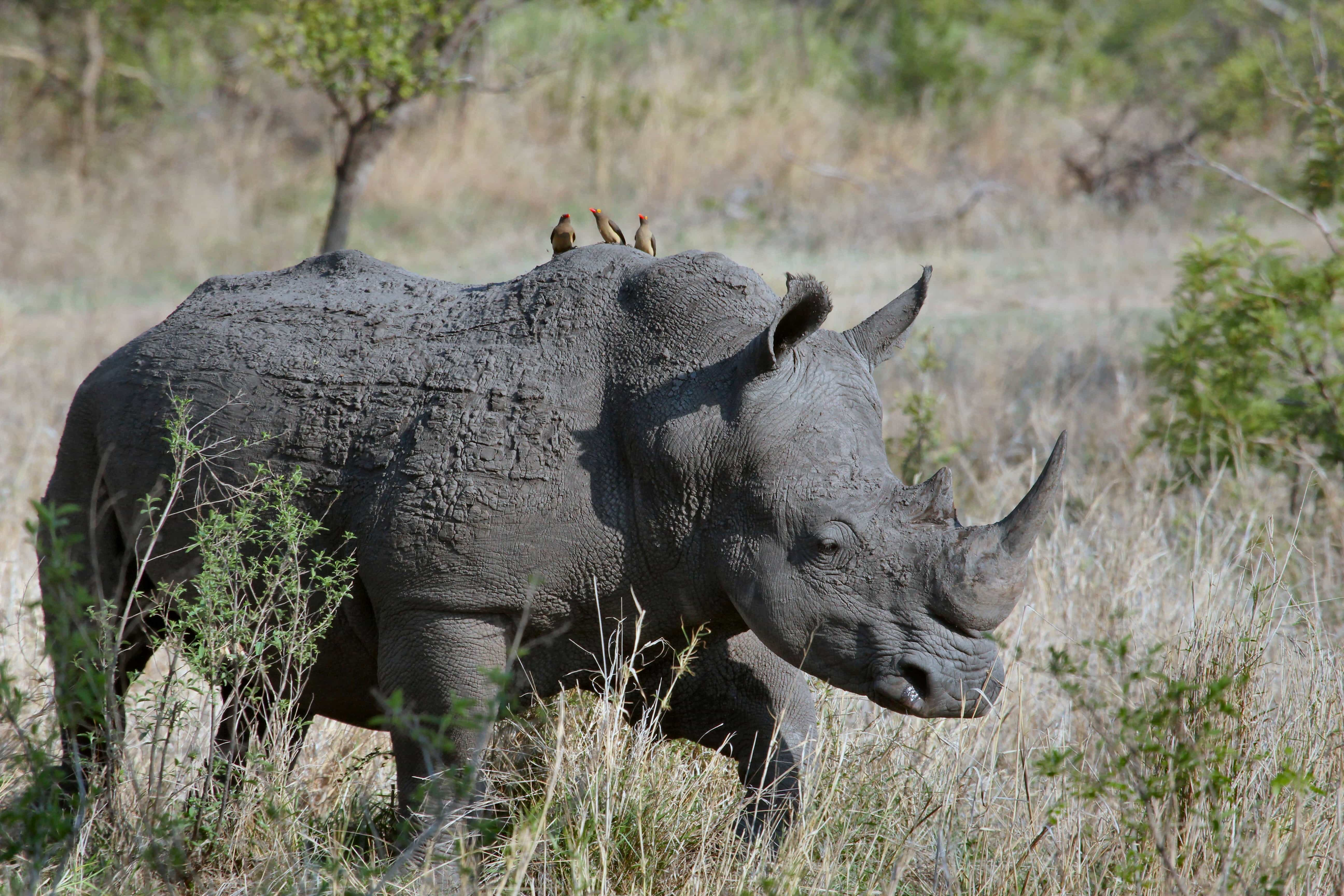 Rhino - Best National Parks in South Africa