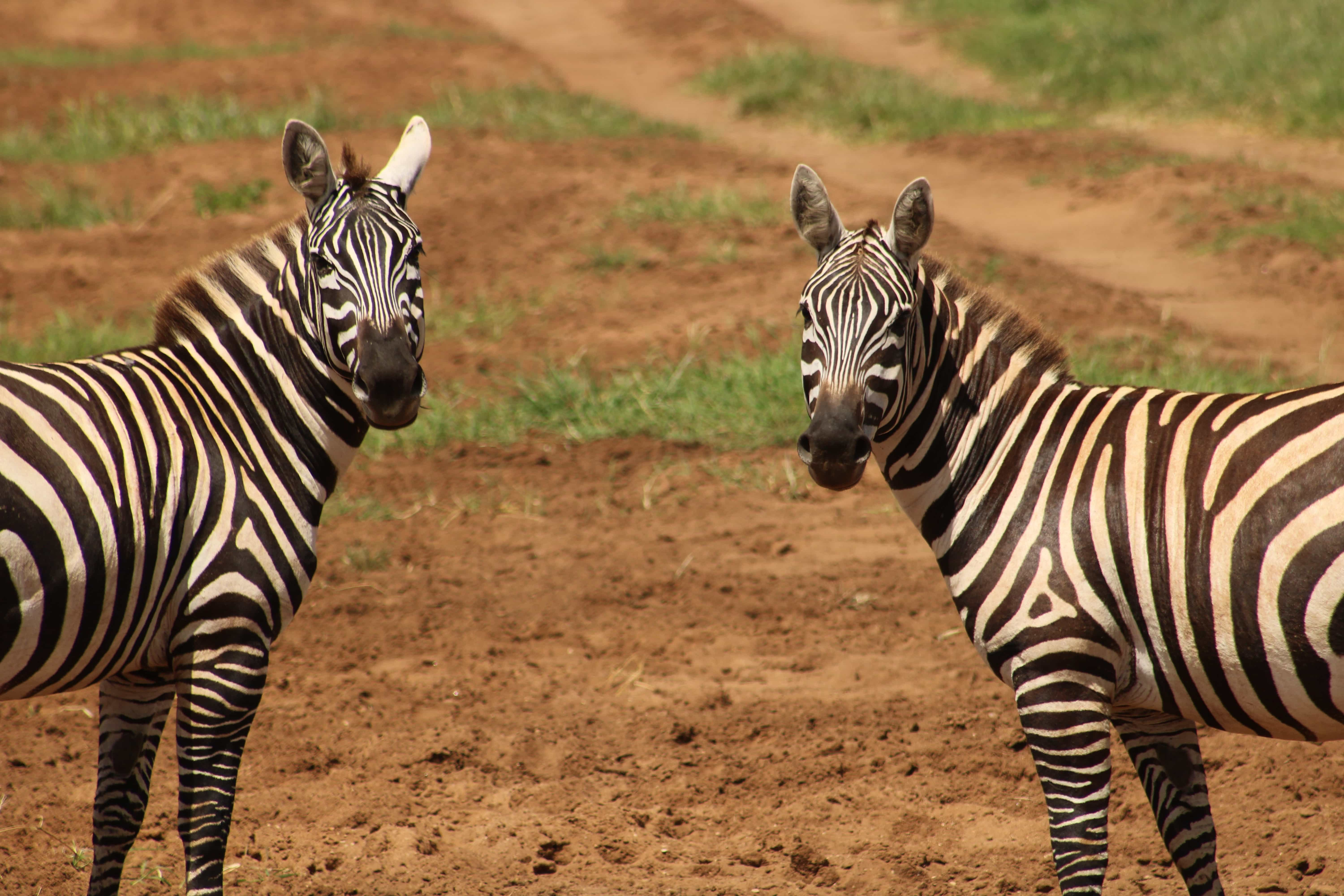 Best National parks South Africa