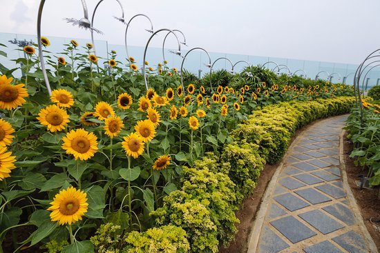 Sun Flower Garden Changi Airport