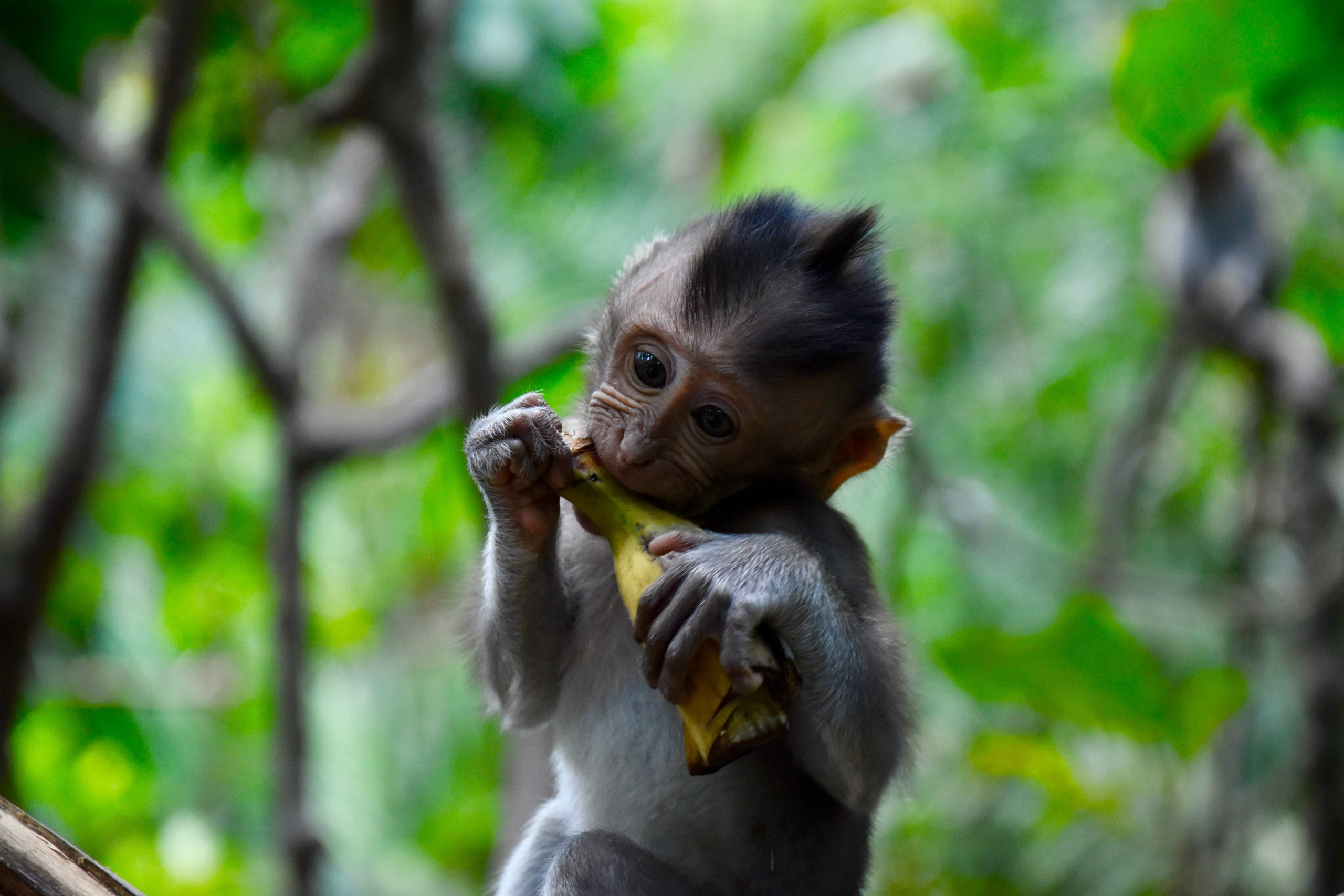 Guide to Ubud Monkey Forest in Bali