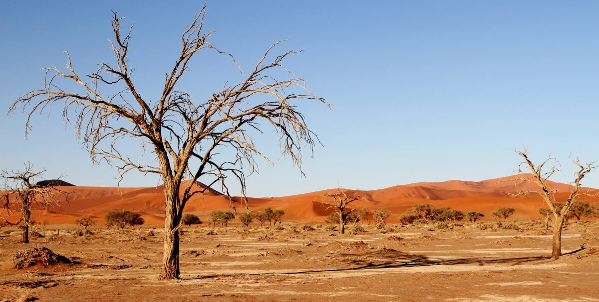 Guide to visiting the Kalahari Desert